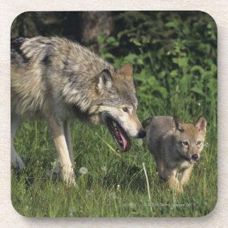 Madre del lobo con el perrito joven
