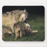 Madre del lobo con los perritos jovenes tapete de ratón