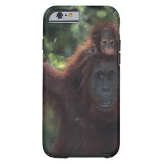 Madre del orangután con el bebé 5 funda para iPhone 6 tough