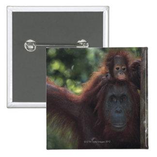 Madre del orangután con el bebé pin cuadrada 5 cm