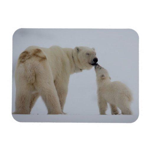Madre del oso polar con el cachorro iman de vinilo