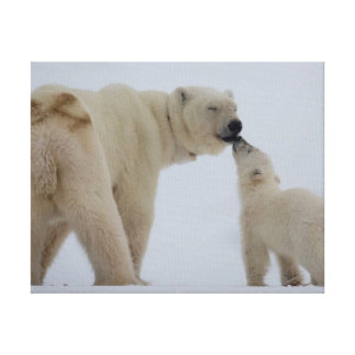 Madre del oso polar con el cachorro impresiones en lienzo estiradas