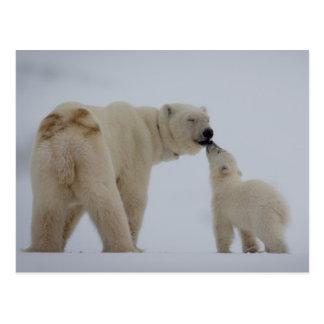 Madre del oso polar con el cachorro tarjeta postal