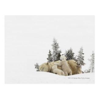 Madre del oso polar y su Cubs en el parque de Postal