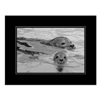 Madre del sello y su cría de foca postal