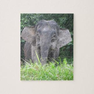 Madre enana del elefante de Borneo Puzzle Con Fotos