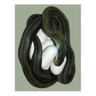 ¡Madre japonesa de la serpiente de rata, hermosa y Tarjeta Postal