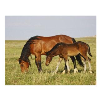 Madre salvaje del caballo salvaje del caballus del tarjetas postales
