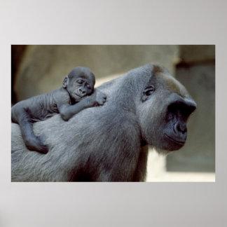 Madre y bebé del gorila póster