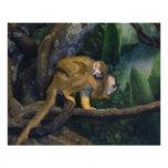 Madre y bebé del mono de ardilla impresion fotografica