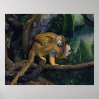 Madre y bebé del mono de ardilla póster