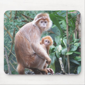 Madre y bebé del mono del Langur Mouse Pad