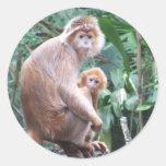 Madre y bebé del mono del Langur Etiquetas Redondas