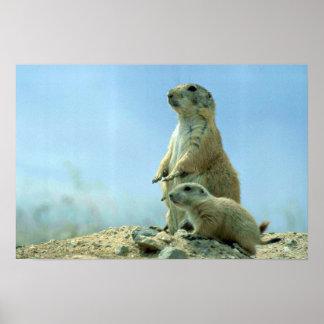 Madre y bebé del perro de las praderas póster