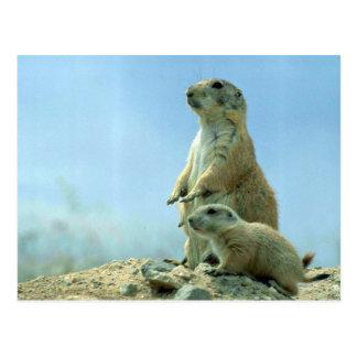 Madre y bebé del perro de las praderas tarjeta postal
