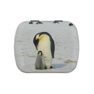 Madre y bebé lindos del pingüino latas de caramelos