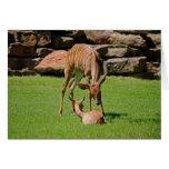 Madre y bebé poco notecard de la foto de Kudu