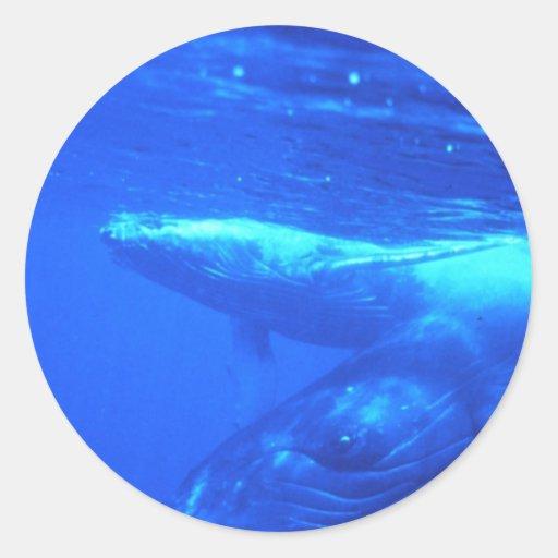 Madre y becerro de la ballena jorobada etiquetas redondas