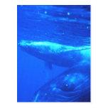 Madre y becerro de la ballena jorobada postal