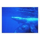 Madre y becerro de la ballena jorobada felicitaciones