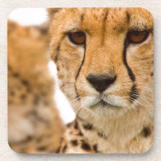 Madre y Cub del guepardo (Acinonyx Jubatus) Posavasos De Bebida