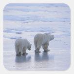 Madre y Cub del oso polar Calcomanías Cuadradas
