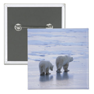 Madre y Cub del oso polar Pin Cuadrado