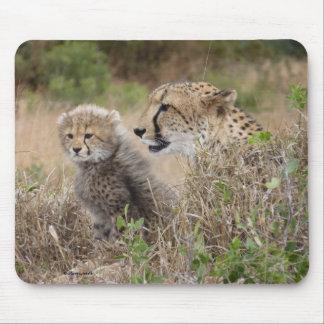 Madre y Cub Mousepad del guepardo