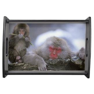 Madre y niño, Jigokudani, Nagano del mono de la ni Bandejas