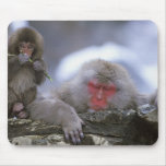 Madre y niño, Jigokudani, Nagano del mono de la ni Alfombrillas De Raton