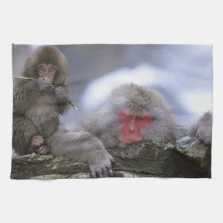 Madre y niño, Jigokudani, Nagano del mono de la ni Toallas De Cocina