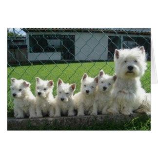 Madre y perritos de Westie Tarjeta De Felicitación