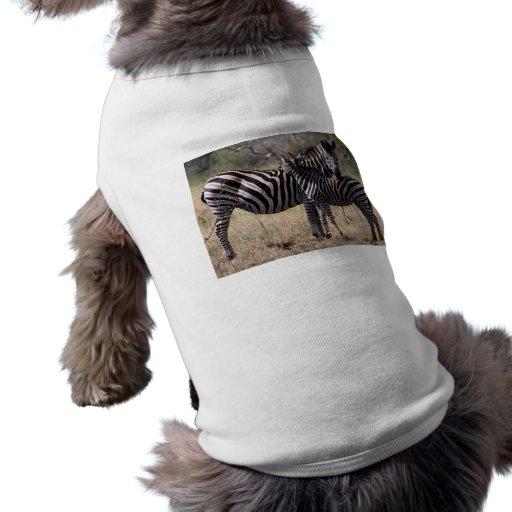 Madre y potro de la cebra camiseta de mascota
