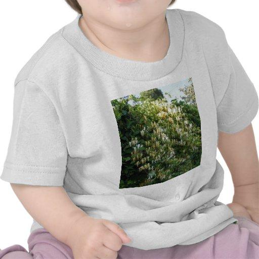 Madreselva en una pared camisetas