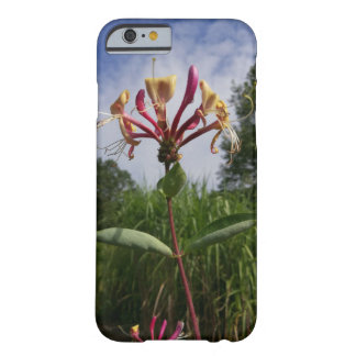Madreselva flor y nubes funda barely there iPhone 6