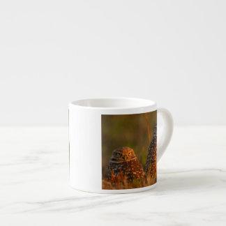 madriguera de pares del búho tazita espresso