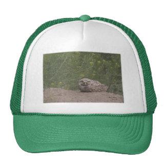 Madriguera del búho gorras