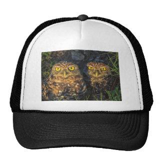 Madriguera los búhos abrazados en su madriguera gorras de camionero