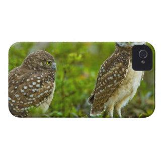 Madriguera los búhos son un sitio popular en Marco Case-Mate iPhone 4 Fundas