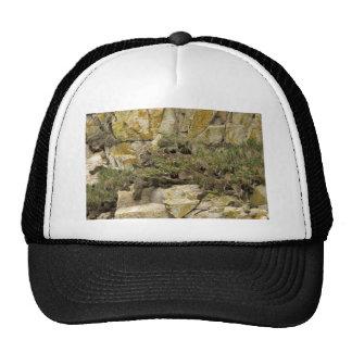 Madrigueras del frailecillo copetudo Castle Rock Gorras