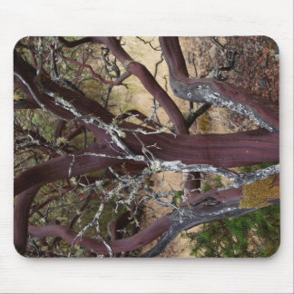 Madrone Bark Mouse Pad