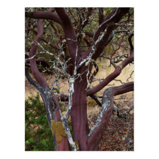 Madrone Bark Postcard
