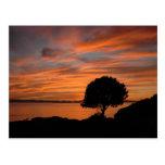 Madrone Sunset Postcard
