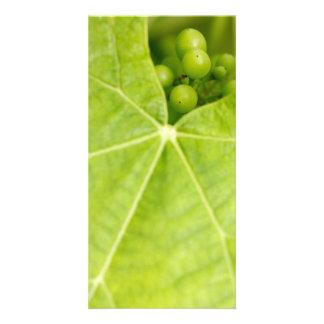 Maduración de las uvas tarjeta con foto personalizada