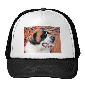 Mae - Saint Bernard Photo-6 Trucker Hat