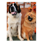 Mae - St Bernard and Cinny - Chow Chow Photo-4 Post Cards