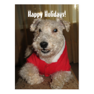 Maestro the Lakeland Terrier Christmas Cards
