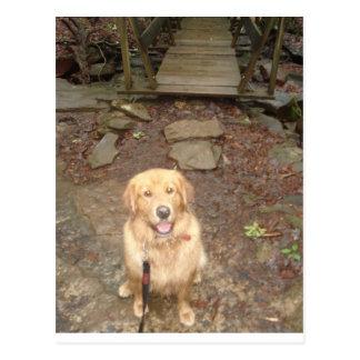 Magellan at a Bridge in Fall Creek Falls, TN Postcard