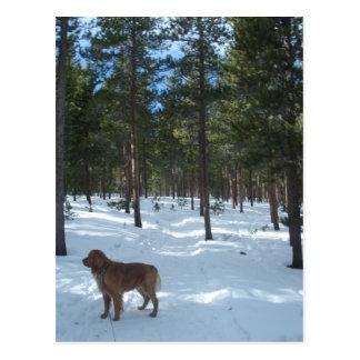 Magellan on Winter Nederland, CO Trail Postcard