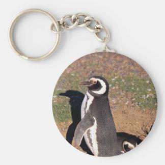 Magellanic Penguin, mated pair at burrow Key Chain